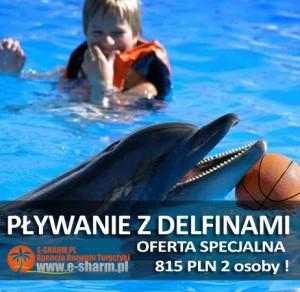 E-SHARM PL Pływanie z delfinami Sharm el Sheikh