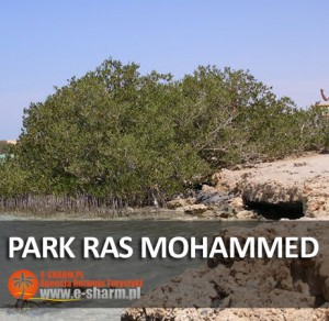E-SHARM PL Park Ras Mohammed wycieczka autobusem