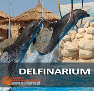 E-SHARM PL Pokaz delfinów Sharm el Sheikh