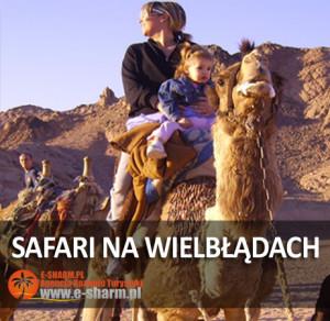 E-SHARM PL safari na wielbłądach Sharm el Sheikh