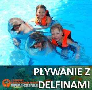 E-SHARM plywanie z delfinami